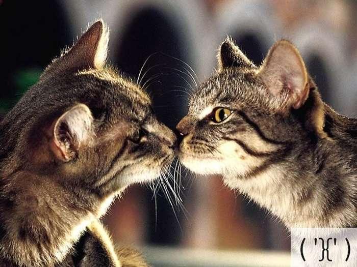 Кошачьи смайлики