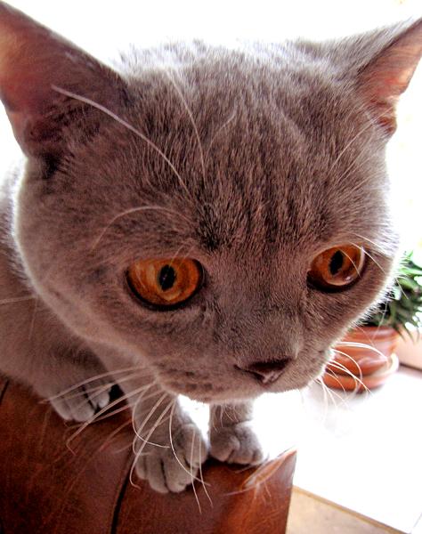 Смешные кошки №5