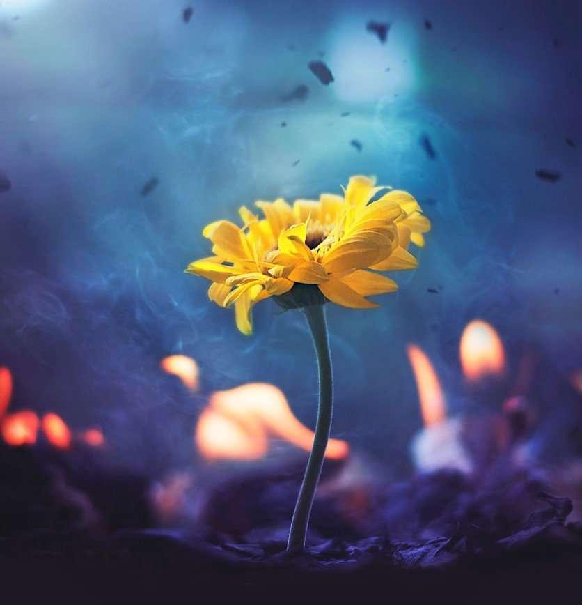 Цветы в объективе бангладешского фотографа