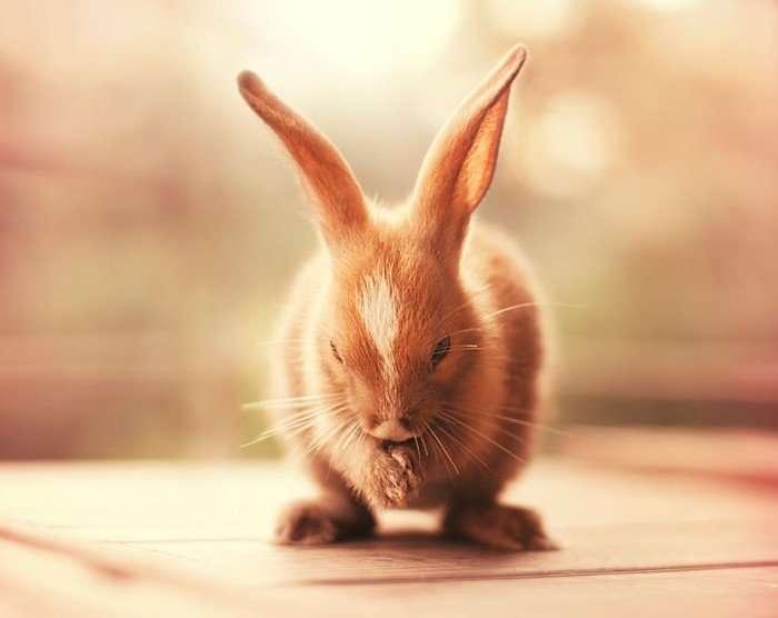 Милашки кролики-модели