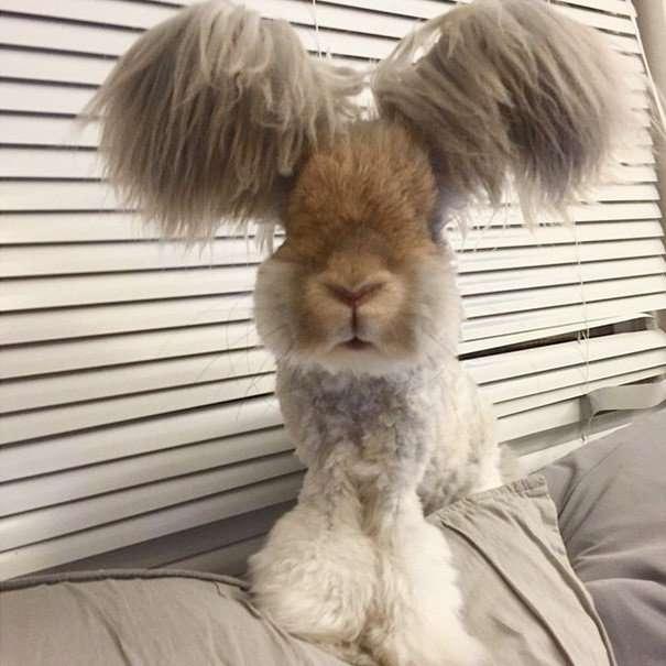 Плюшевый кролик Уолли