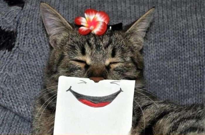 Кошачьи эмоции
