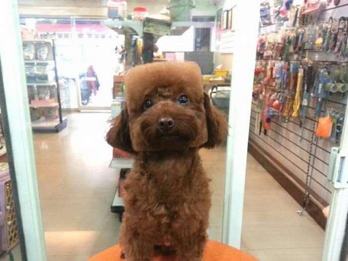 Стильные причёски для собак
