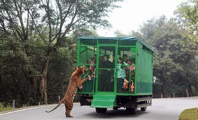Китайский зоопарк и посетители в клетках