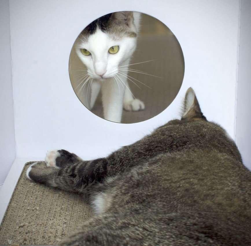 Домик для кошки в виде молочного пакета
