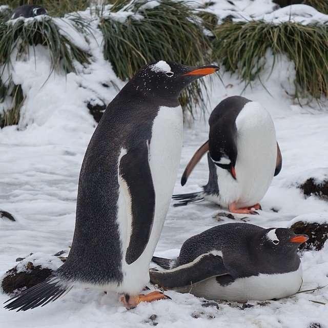 Будни пингвинов глазами Мэри Брэнсфилд