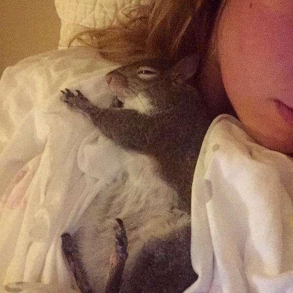 Белка Джилл, спасенная от урагана, стала звездой Instagram