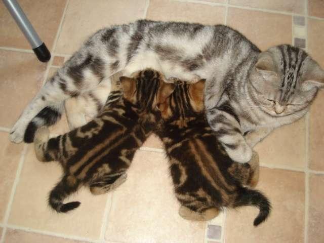 Фото кошек Евы: выпуск №3