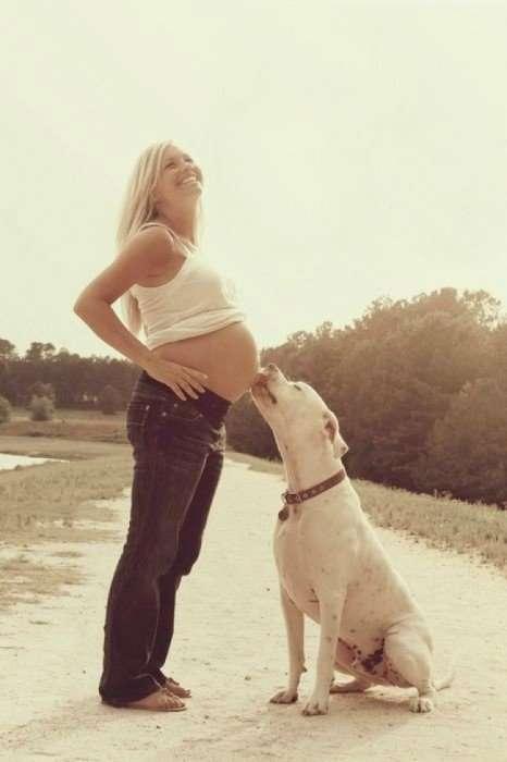 Собаки, которые очень ждут рождения малышей