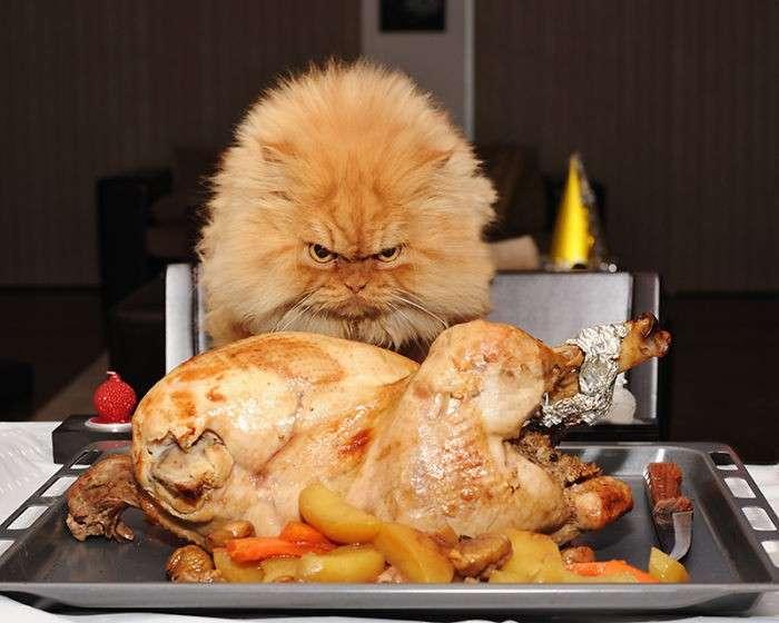 Гарфи - самый суровый кот в мире