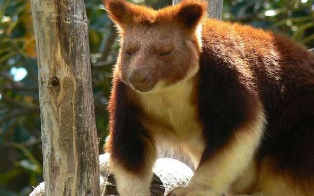 Необычные животные Австралии