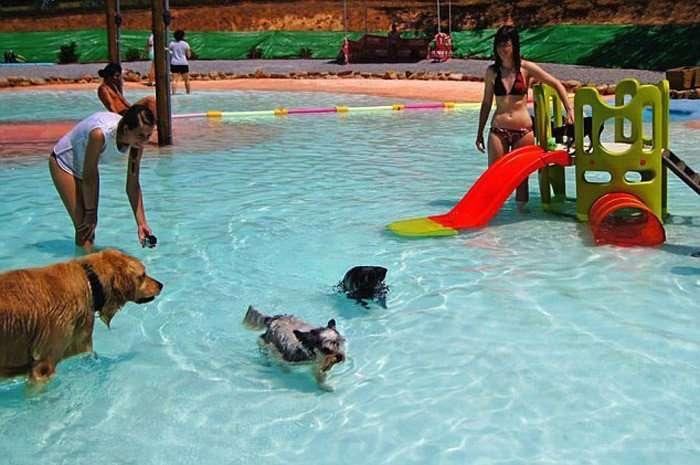 В Испании открыт бассейн для собак